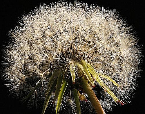 floweringnetwork